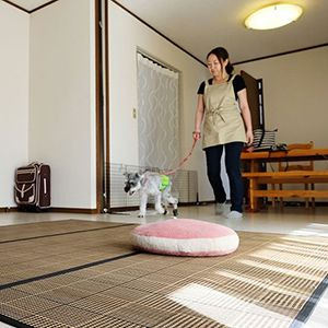 PET CARE HOME Lyuca(リュッカ)