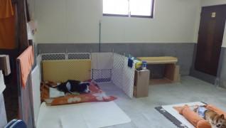 老犬ホームぱーとなー 介護室