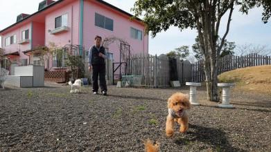 老犬セラピー介護風景