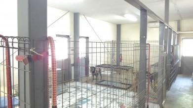 老犬ホームトップ 犬舎内部