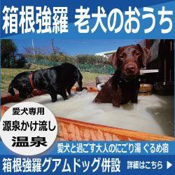 箱根強羅老犬のおうちバナー