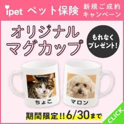 ipet_老犬・老猫向け保険バナー