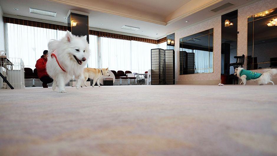 老犬ホーム水上温泉寶ホテル ドッグラン