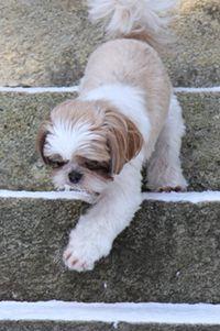 老犬と階段