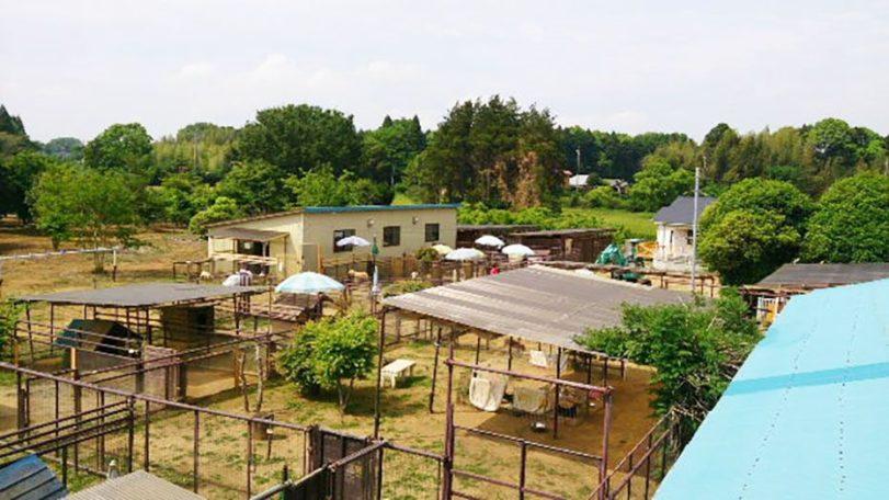 老犬ホーム花園牧場 施設外観