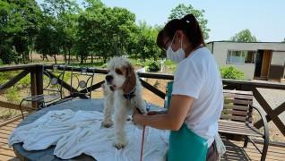 老犬ホーム花園牧場 トリミング