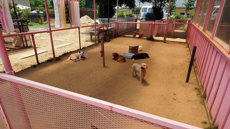 老犬ホーム花園牧場 犬舎運動場