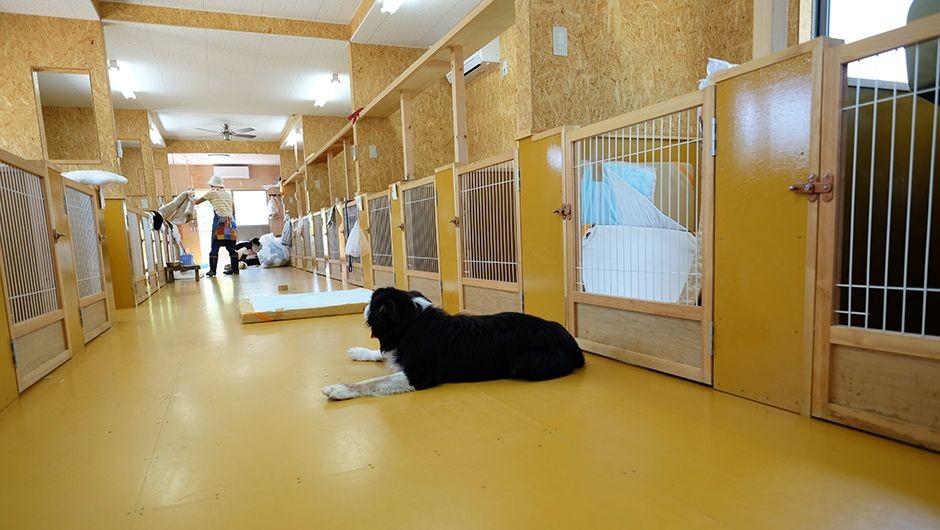 老犬ホーム花園牧場 犬舎内部