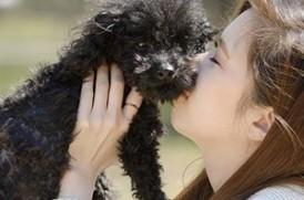 犬と女性のイメージ画像