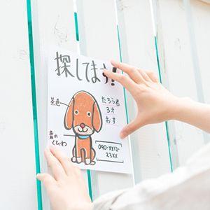 愛犬を探すイメージ画像