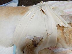 寝たきり犬の褥瘡治癒方法