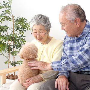 老人と愛犬
