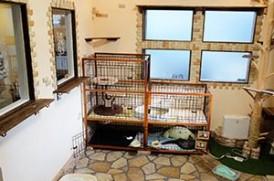 東京ペットホーム 猫の部屋
