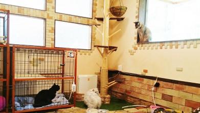 老犬老猫ホーム東京ペットホーム 猫のお部屋