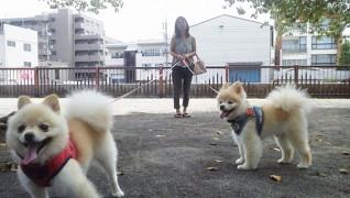 老犬老猫ホーム東京ペットホーム お散歩