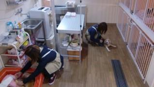 老犬老猫ホーム東京ペットホーム 介護風景