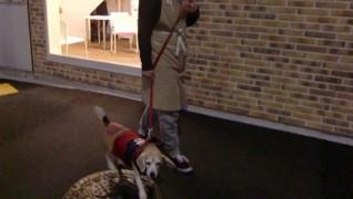 老犬老猫ホーム東京ペットホーム 早朝散歩