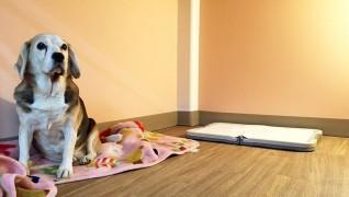 老犬老猫ホーム東京ペットホーム 犬のお部屋