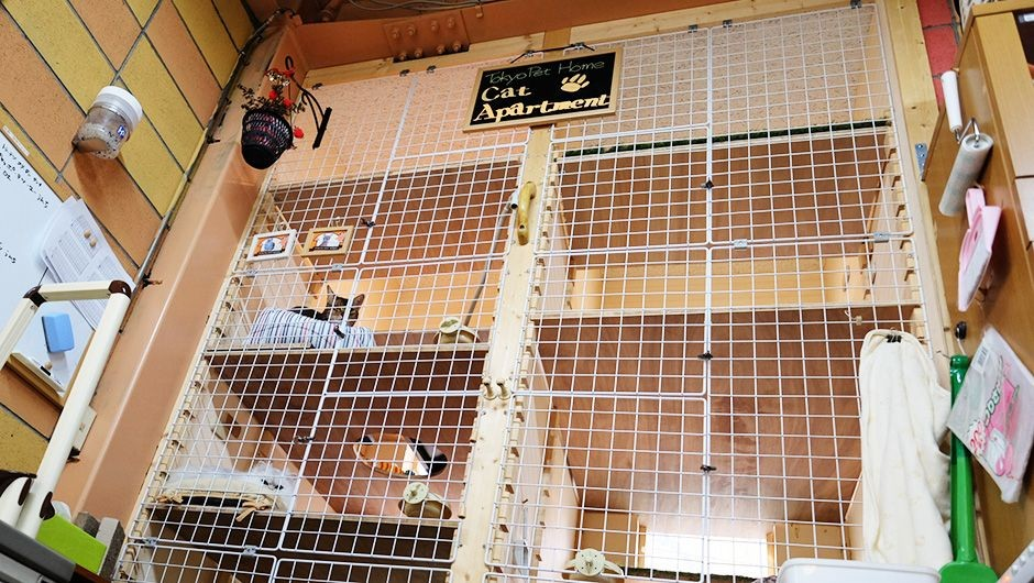 老犬老猫ホーム東京ペットホーム キャットタワー
