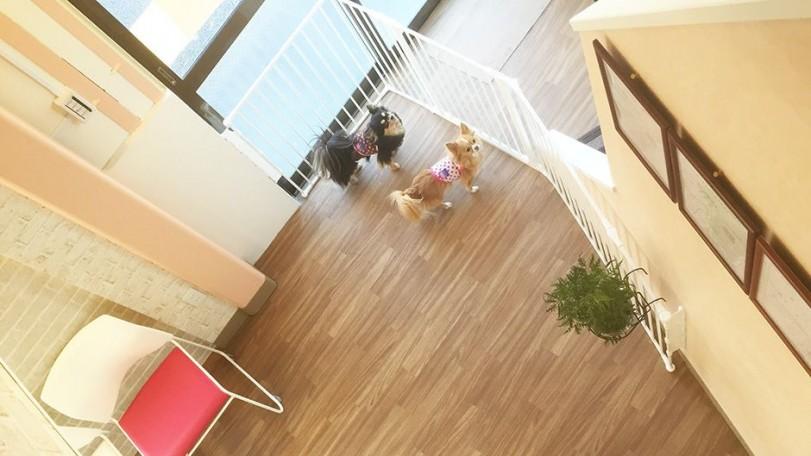 老犬老猫ホーム東京ペットホーム 2号館内観