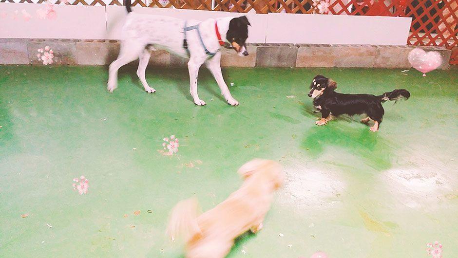 老犬ホームワンダーわん 屋内運動場