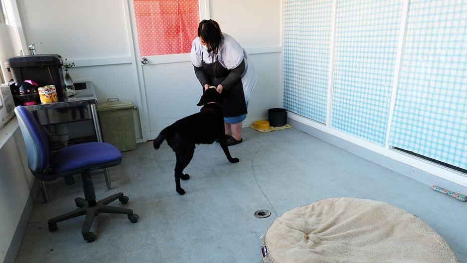 老犬ホームワンダーわん 大型犬個室