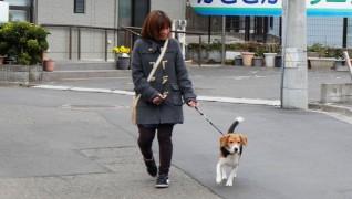 老犬・老猫ホームニャンワンクラブ お散歩