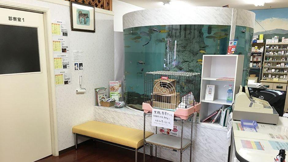 コビー動物病院内観