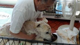 介護付老犬・老猫ホーム おりづる園食事介護