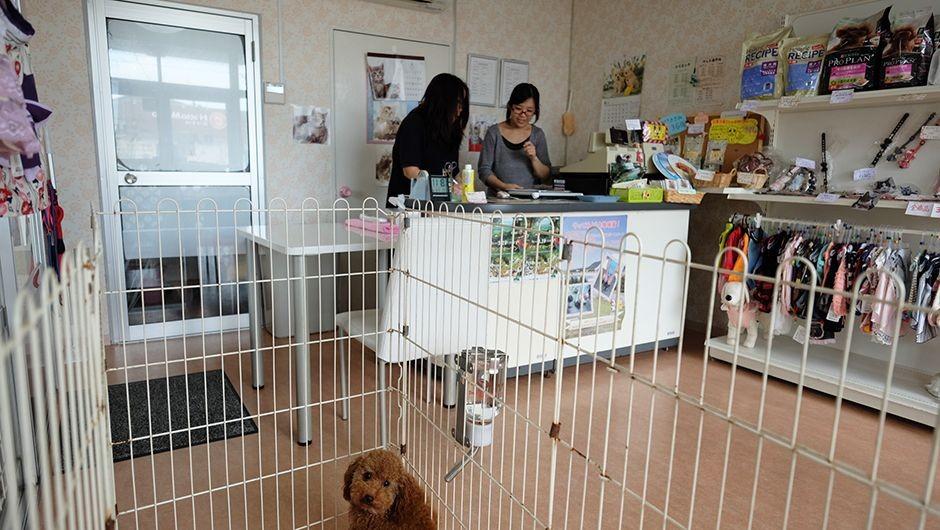コビー動物病院老犬・老猫ホームの内観