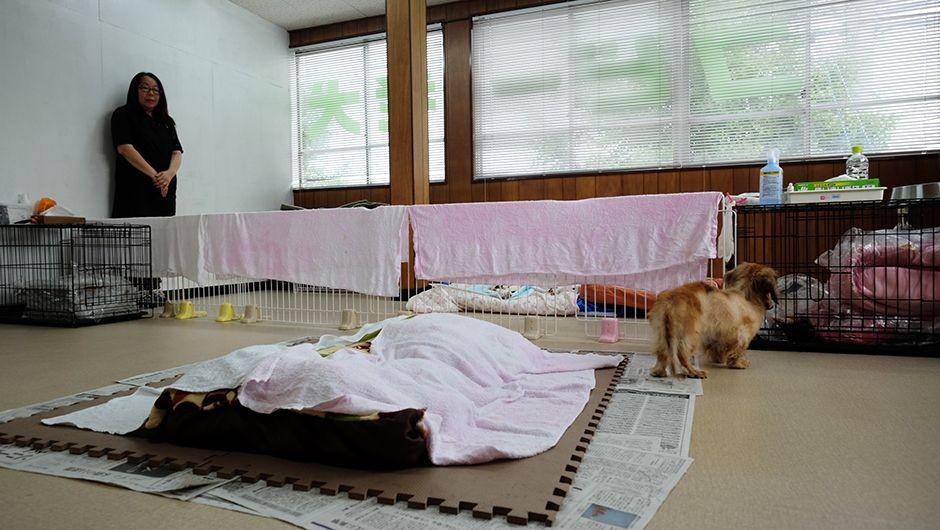 コビー動物病院老犬・老猫ホームの介護室