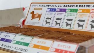 老犬介護木原ペットクリニックBCS