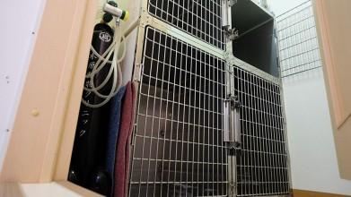老犬介護木原ペットクリニック入院室