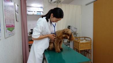 老犬介護木原ペットクリニック診察風景