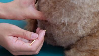 老犬介護木原ペットクリニック治療風景