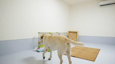 老犬介護ホームろうたす 介護室