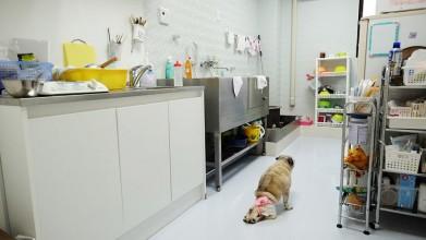老犬介護ホームろうたす キッチン