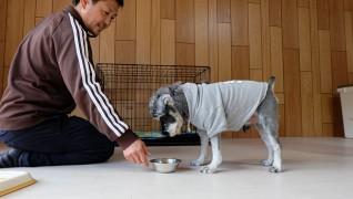老犬ホームJiJi食事風景