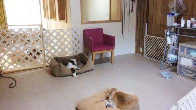 老犬ホームJiJi ワンちゃんのお部屋