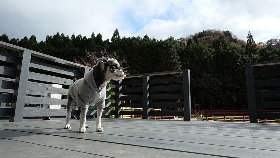 老犬ホームJiJiウッドデッキ