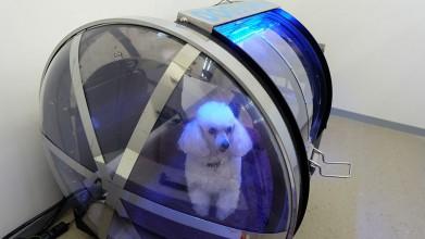 老犬介護ホームメロー 酸素カプセル