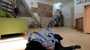 老犬ホームドッグライフプランナーズ新宿 内観