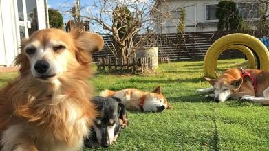 老犬ホーム九十九里パーク 日向ぼっこ風景