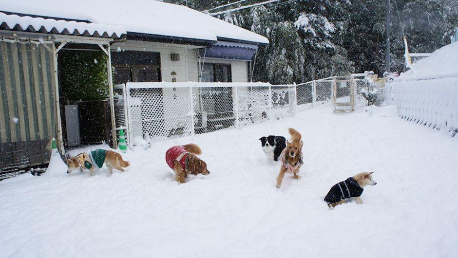 老犬ホームルナ 冬のドッグラン