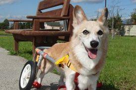 老犬と車椅子