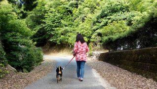 老犬ホーム伝 散歩風景