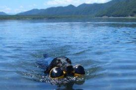 愛犬の水あそび