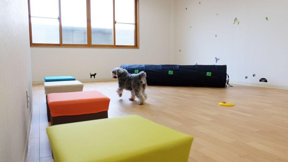 老犬ホームぬち・どぅ・たから 屋内運動場