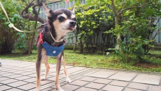 老犬ホームWANCOTT 介護風景散歩
