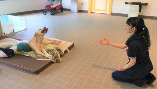 老犬ホームWANCOTT 介護風景プレイタイム